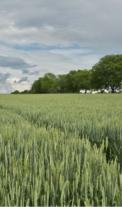 Rozhovor s investorem – jak vydělat na zemědělské půdě