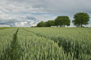 Jak vydělat na zemědělské půdě - rozhovor