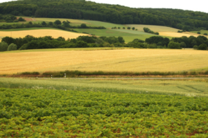 Jak nejlépe prodat zemědělskou půdu
