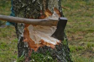 ADOL Kácení stromů bez pokut a bez povolení