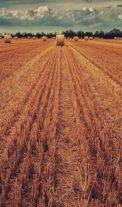 LPIS – pomocník při investování do zemědělské půdy